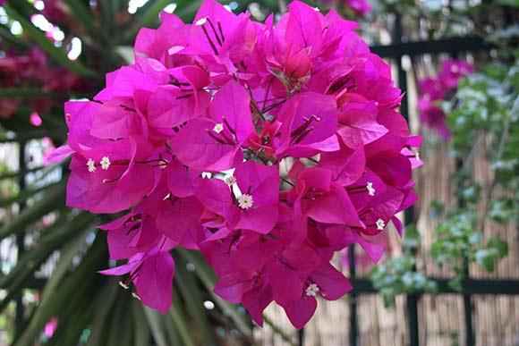 levensenergie-bloem